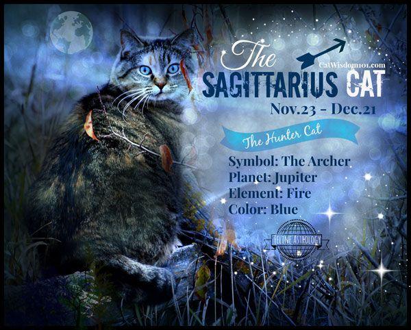 Oroscopi del gattino: il dicembre appartiene all`avventuroso gatto sagittario