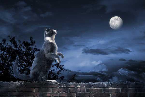 Oroscopi del gattino: il novembre appartiene allo scoraggiante scorpione felino