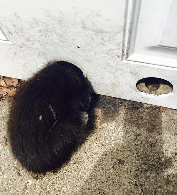Manopole il gattino ha la testa bloccata nel foro della maniglia