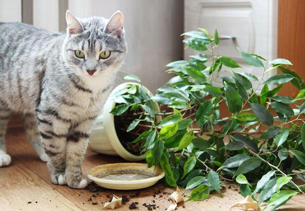 Regali della mamma dai gatti: come è andata?