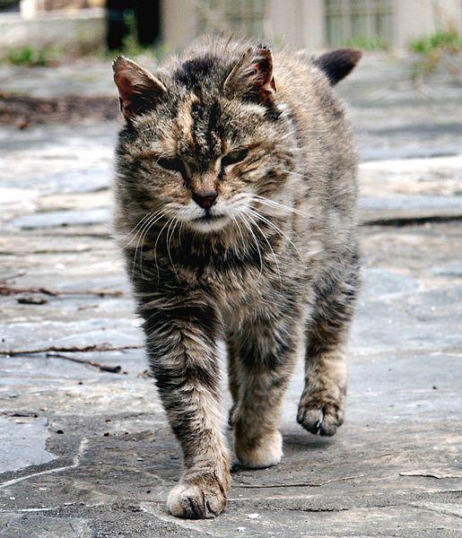 Giornata nazionale dei gatti selvatici: sii parte della soluzione