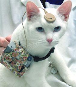 Nih non permetterà più ai ricercatori di acquistare gatti a caso