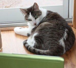 Pet photo contest seeks feline mvps