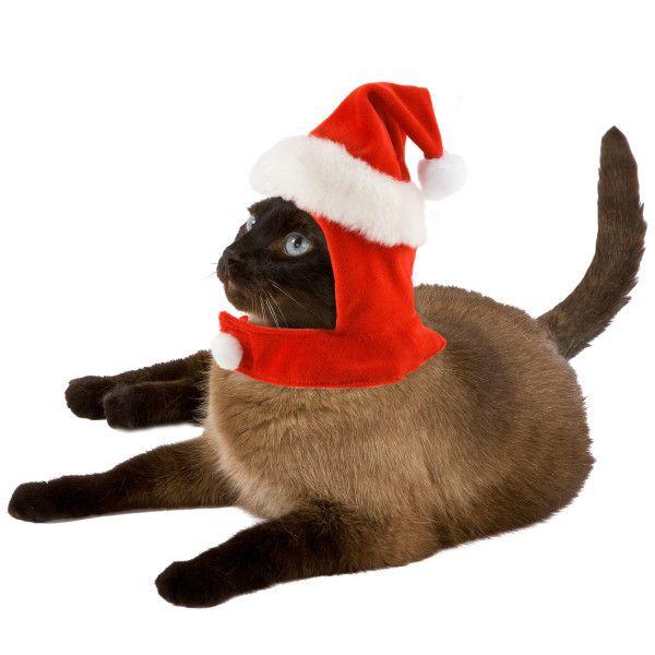 Concorso Petsmart in esclusiva per i lettori di meow di gatto