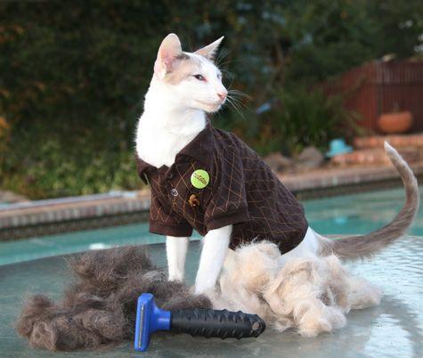 La tua pelliccia e i tuoi capelli possono aiutare a pulire la fuoriuscita di petrolio del golfo e vincere una maglietta
