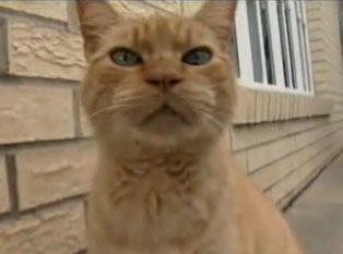 Sammy il gatto ottiene il suo p.o. Scatola