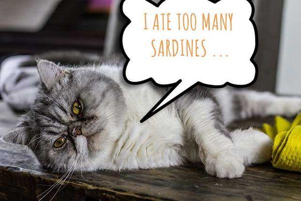 Gatto con una bolla di pensiero che dice che ho mangiato troppe sarde