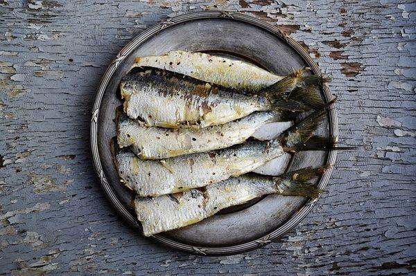 Piastra metallica piena di sardine