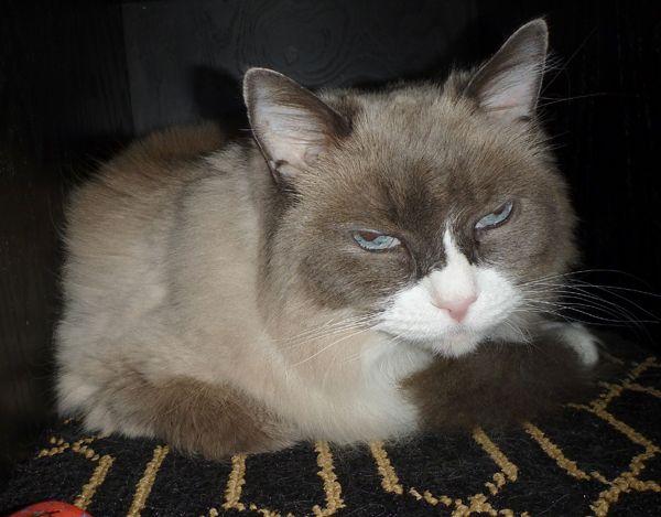Le 10 cose migliori della festa annuale dell`algonquin hotel per matilda il gatto residente
