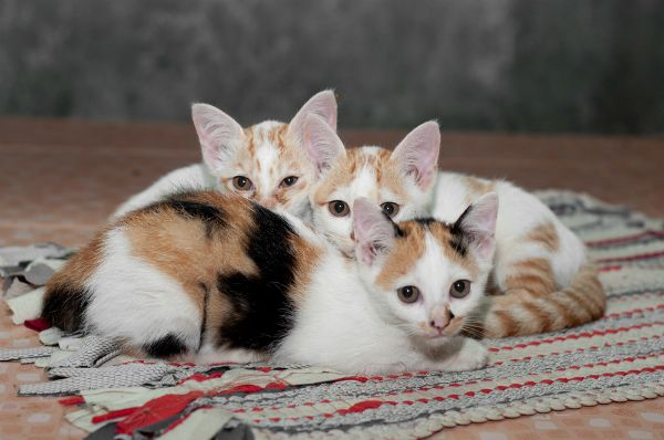 I 10 nomi di gatti più trendy del 2012