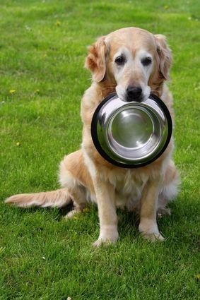 I 5 migliori alimenti per cani per le allergie