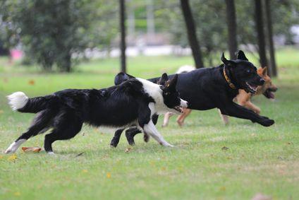 I benefici dell`esercizio per cani con problemi comportamentali