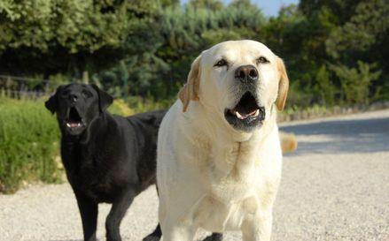 I metodi più efficaci per fermare il cane che abbaia