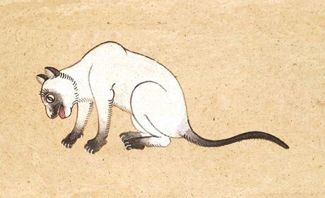 La razza del gatto siamese: informazioni e fatti