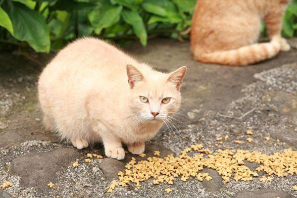 Tnr volontario condannato per avere troppi gatti