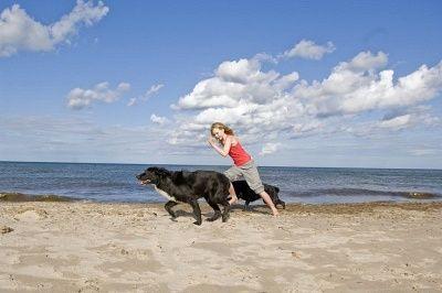 I 10 principali motivi per esercitare il tuo cane ogni giorno