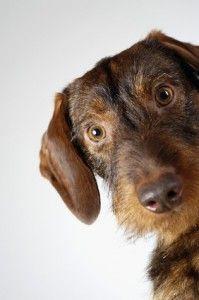 I 10 modi migliori per prevenire l`ansia da separazione nei cani