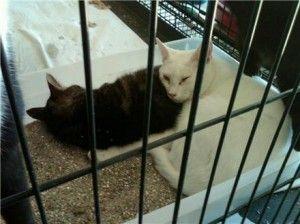 Aggiornamento: i gatti sequestrati al salvataggio della Carolina del Sud