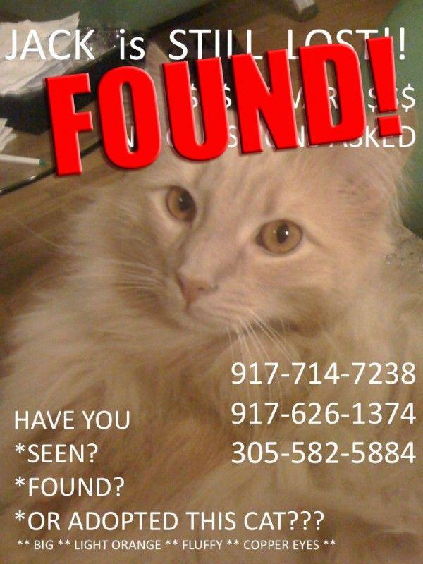 Richiesta urgente per aiutare i gatti che non sono jack (e aggiornamento: jack è stato trovato!)