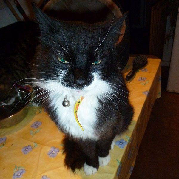 Ci siamo assicurati che l`ultima settimana della vita del nostro gatto fosse speciale