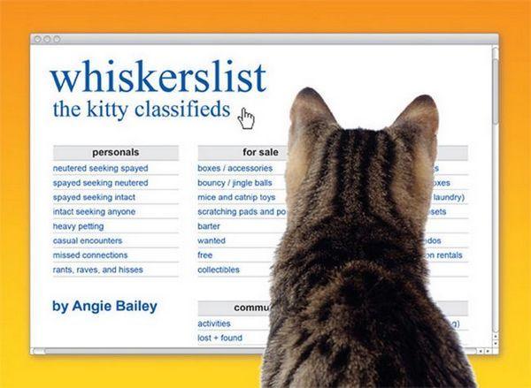 Parliamo con la scrittrice di gatti angie bailey del suo libro di umorismo per gatti