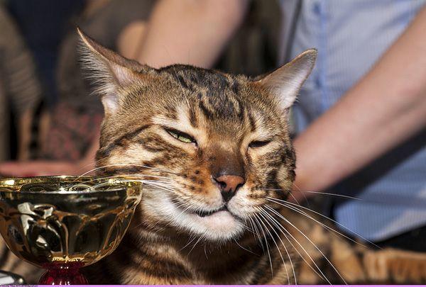 E se i gatti fossero politici? Questi sarebbero i loro annunci diffamatori