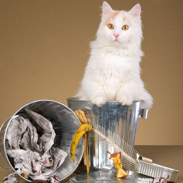 Quali atti casuali di gentilezza fa il tuo gatto per te?