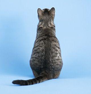 Quello che i tuoi mobili per gatti dicono di te