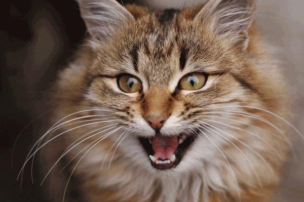Dove erano i gatti nelle pubblicità della super bowl?