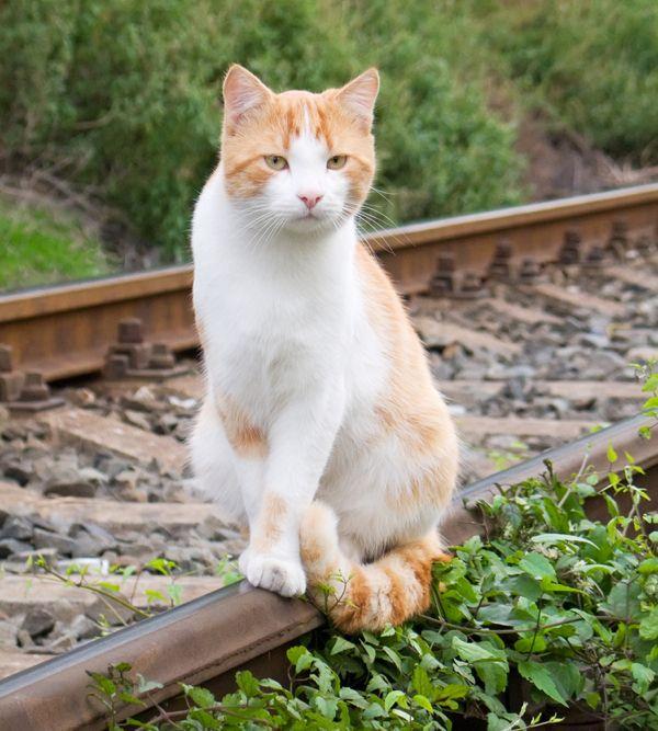 Porteresti il tuo gatto in un viaggio in treno?